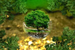Mini drvce zarobljeno u razbijenoj staklenoj kugli simbolizira ugroženost priode